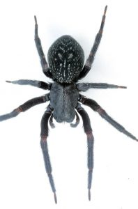 Spider Removal London